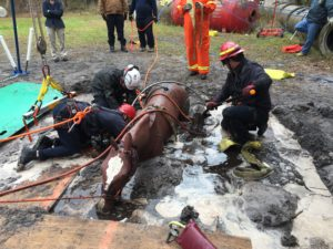 Technical Large Animal Rescue training in the mud.